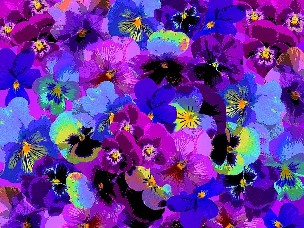 картинки с цветами фиолетово-синего подтверждение была