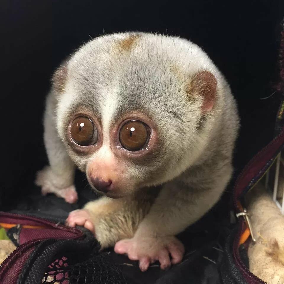 Смотреть картинки животные с большими глазами