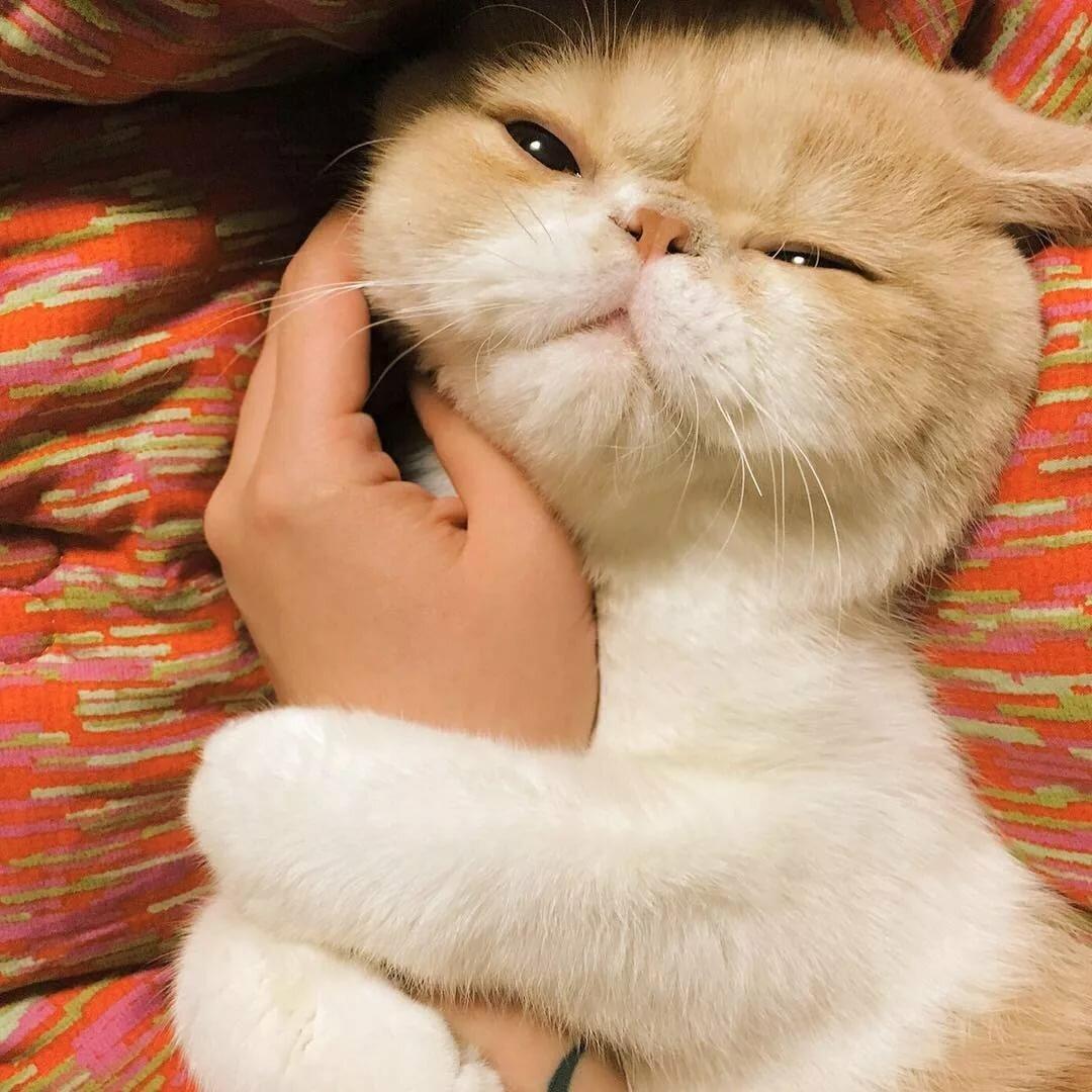 шикарная картинки ласковых котиков ждать верить