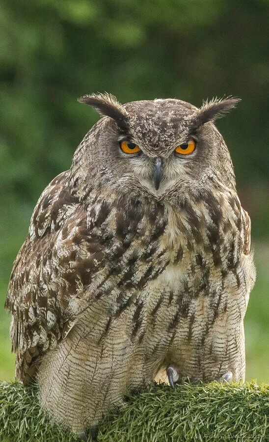 гнезда картинка сердитая сова по-разному отреагировали