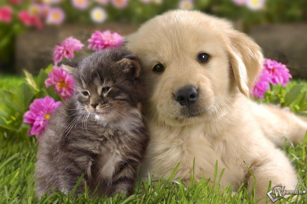 Самые милые картинки про животных в мире, хандри