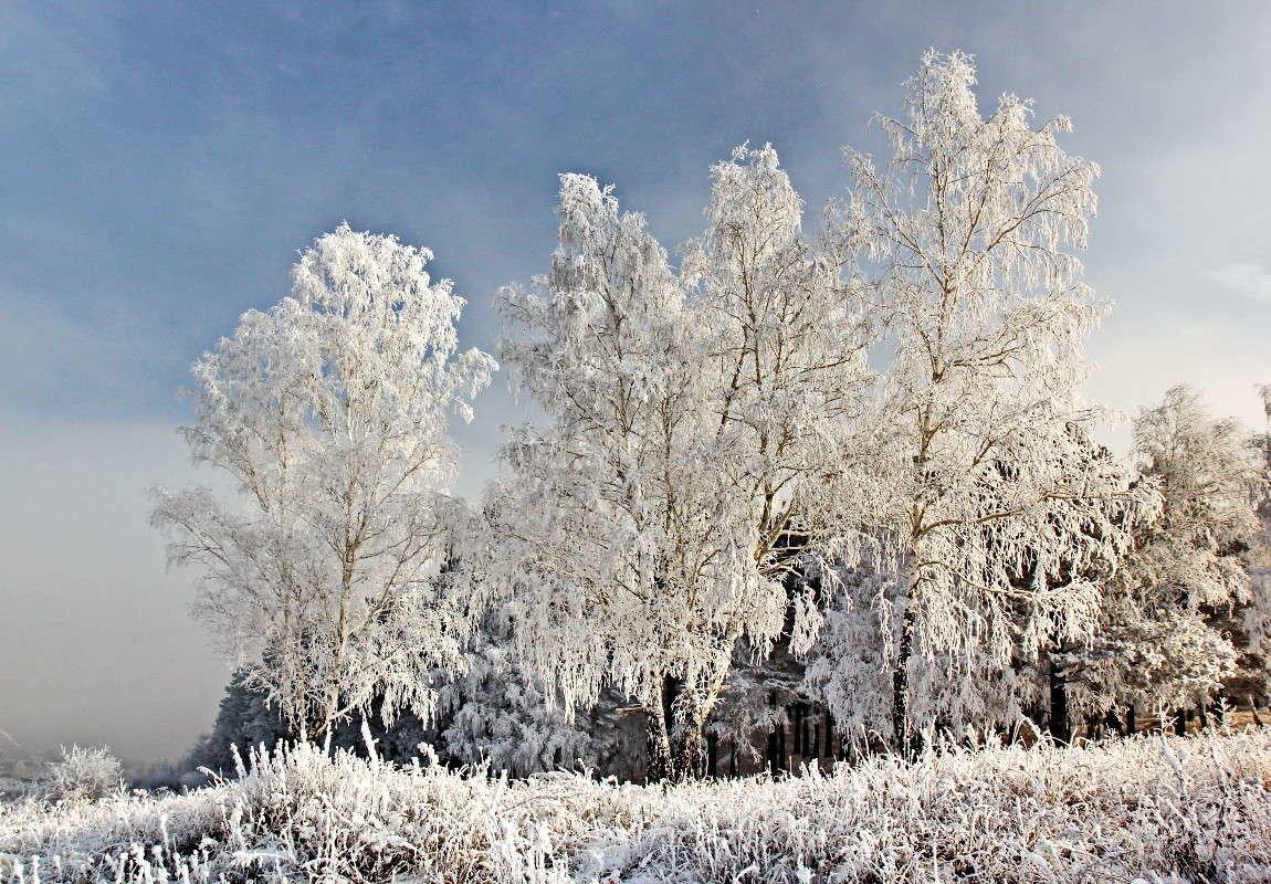 зима иней природа картинки