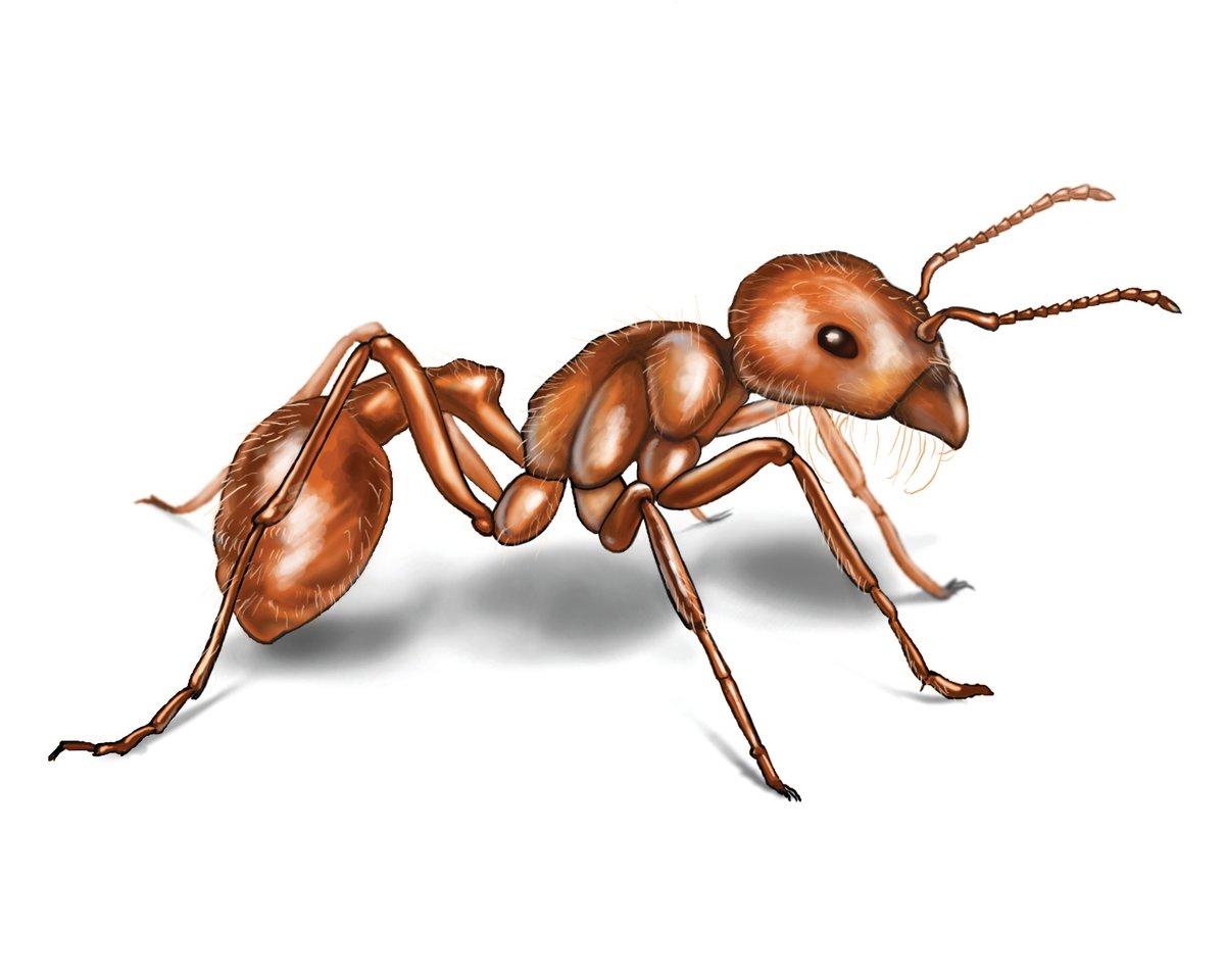 чем сидеть картинка с изображением муравья после