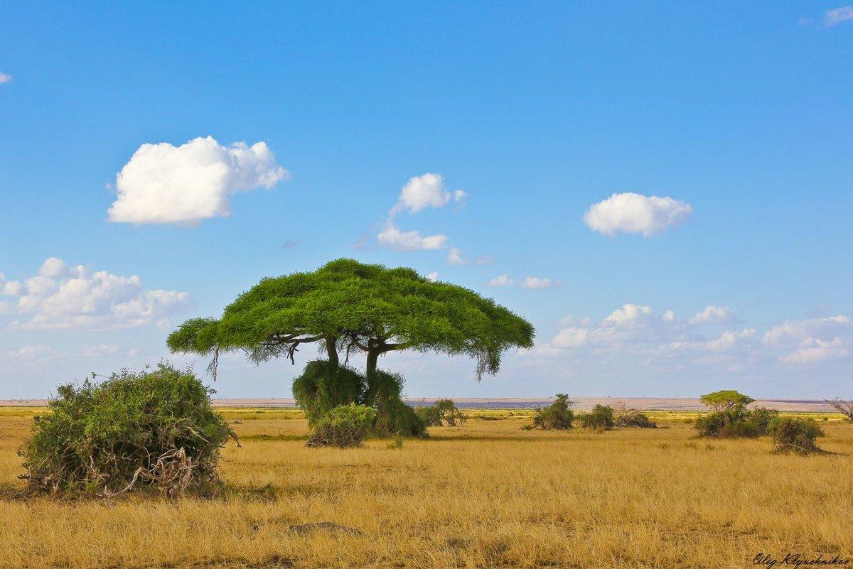 Саванна африка картинки