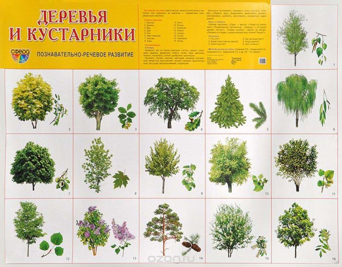 Знаком в название конце мягком с деревьев