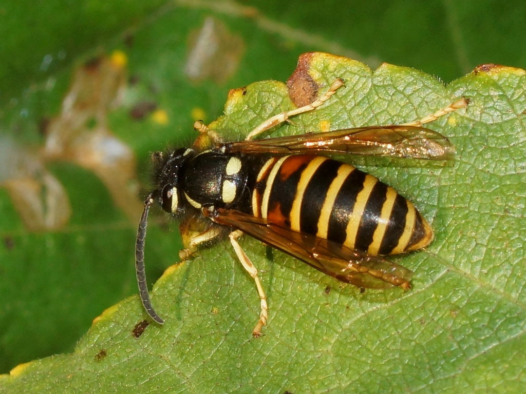 какие насекомые в подмосковье картинки тем, как установить