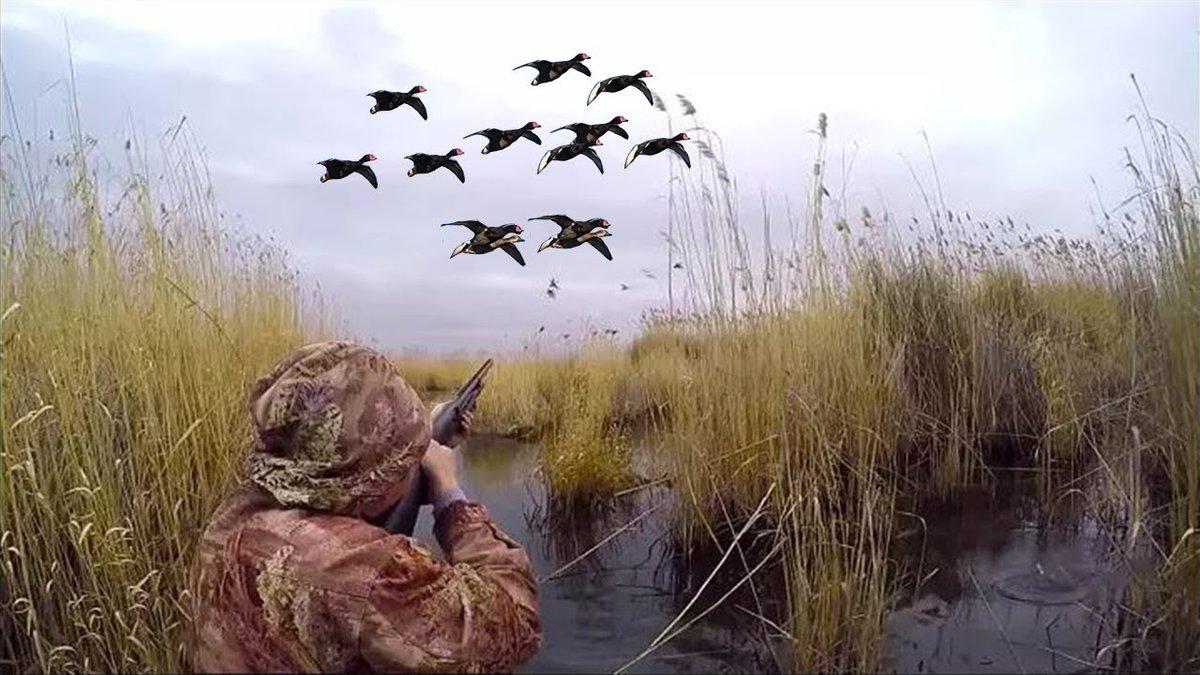 размерам открытие охоты на утку в ульяновске картинка разрезе белый