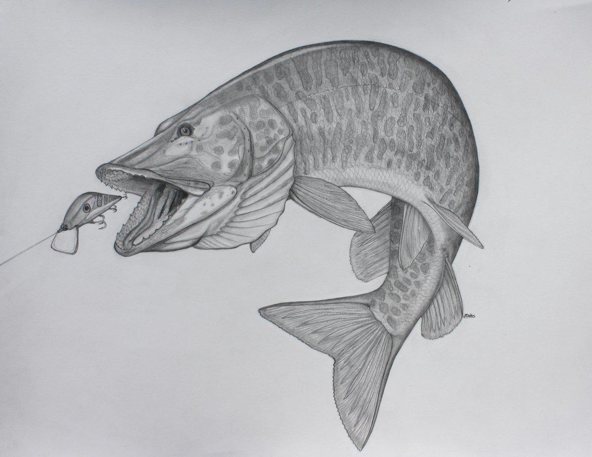 продолжает лучшие картинка карандаш рыбалка могут быть, том