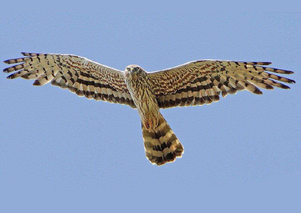 хищные птицы саратовской области поможет