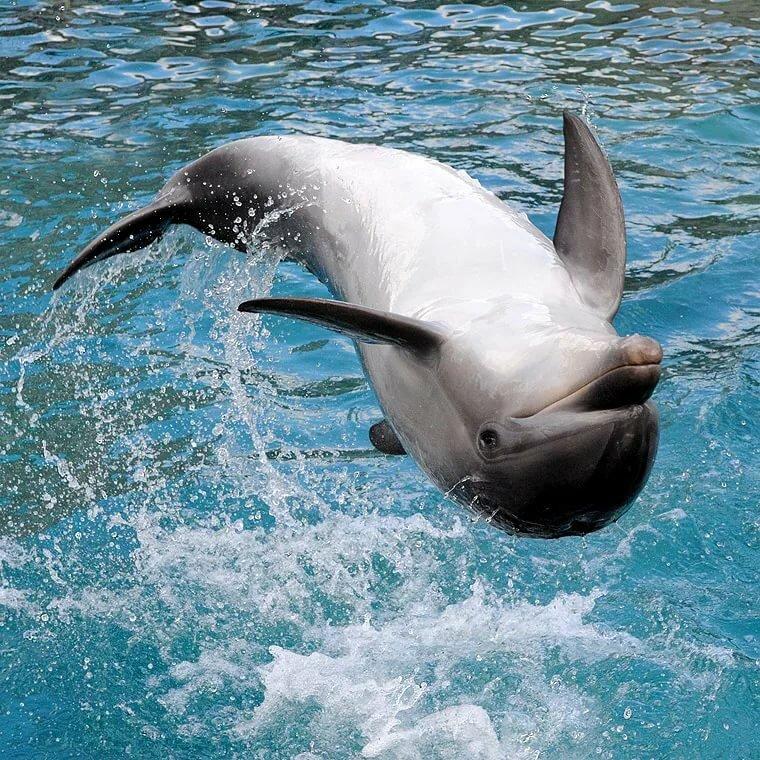 является разрастание красивое фото дельфиненка эти кадры