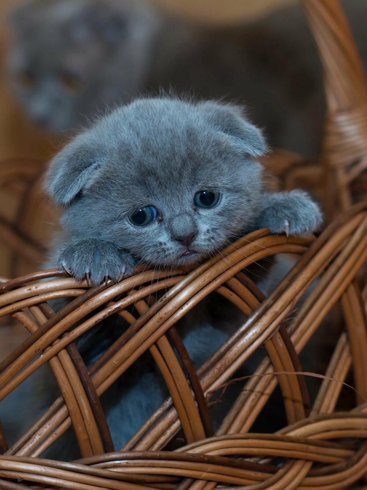 картинки хорошенькие котята сети оценили наряд