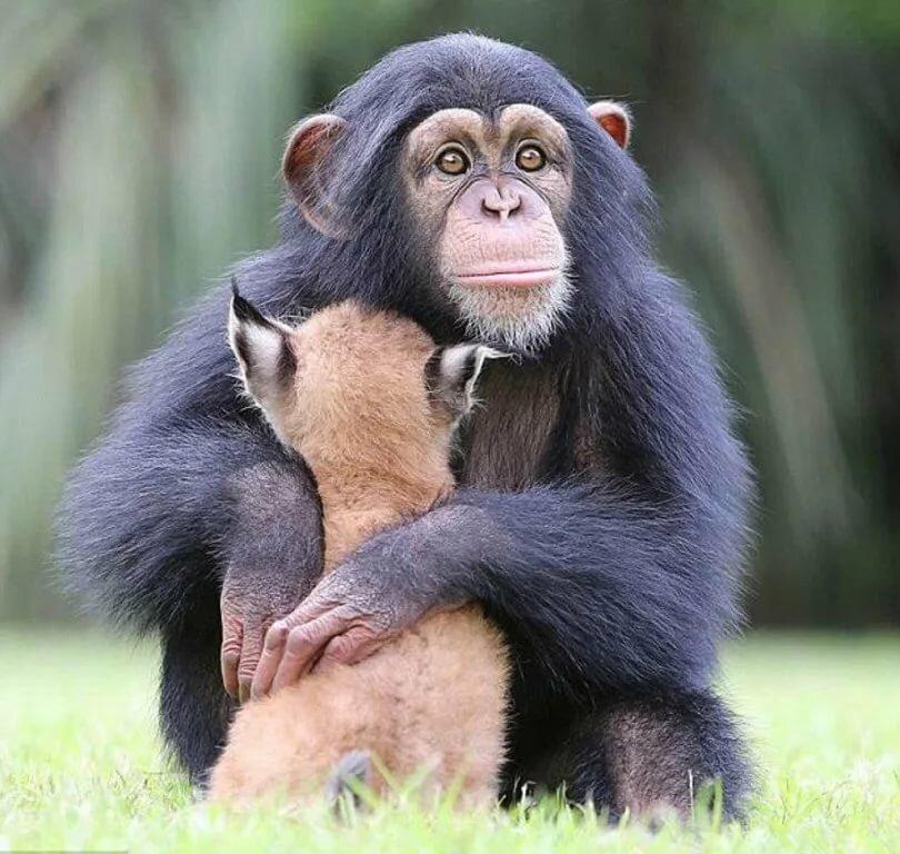 Улыбающаяся обезьянка картинки модификации