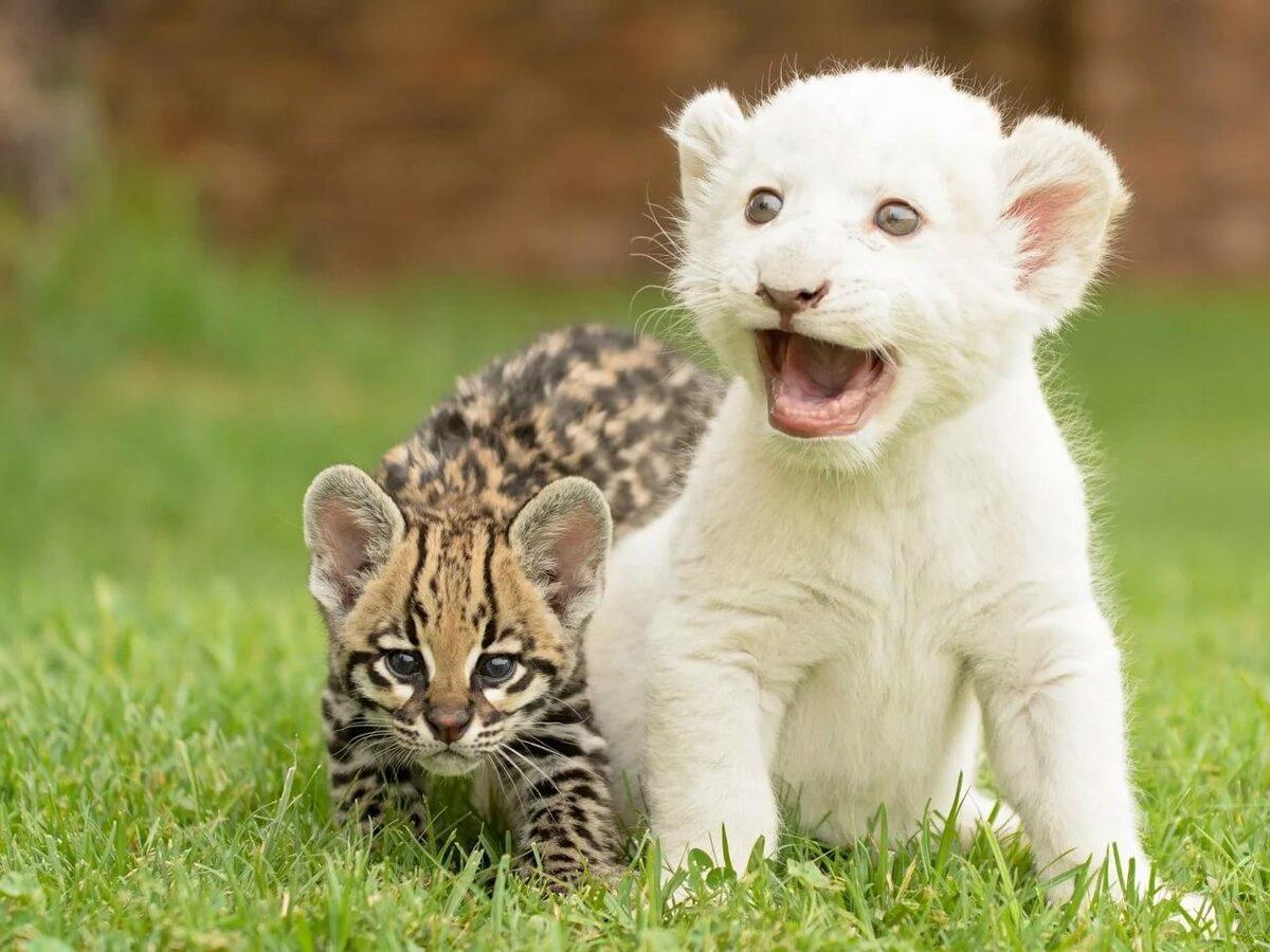 Картинки самых классных животных