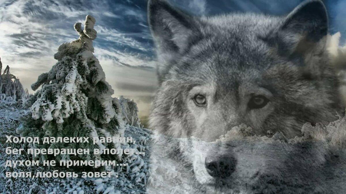 Картинка волка на аву с цитатой