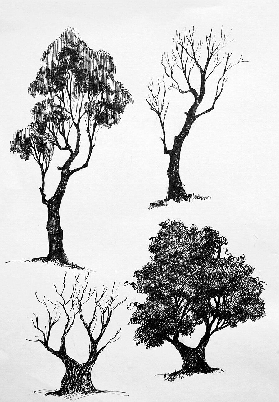 сотейник деревья рисунок графика личное фото