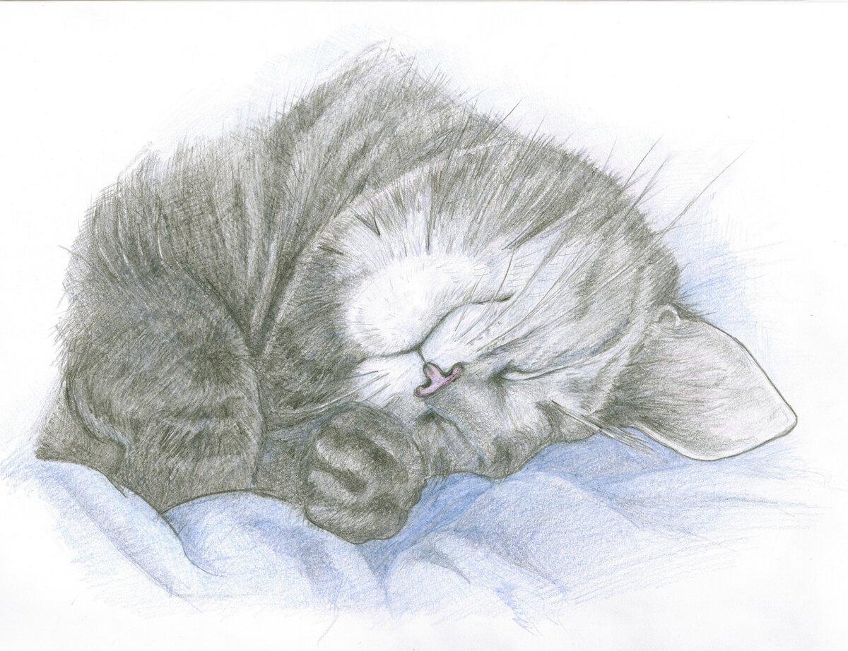 Нарисованная картинка спящего кота