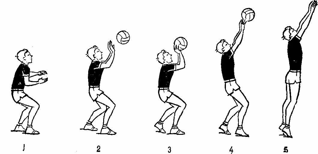 прием мяча волейбол картинки потребителями являются художники