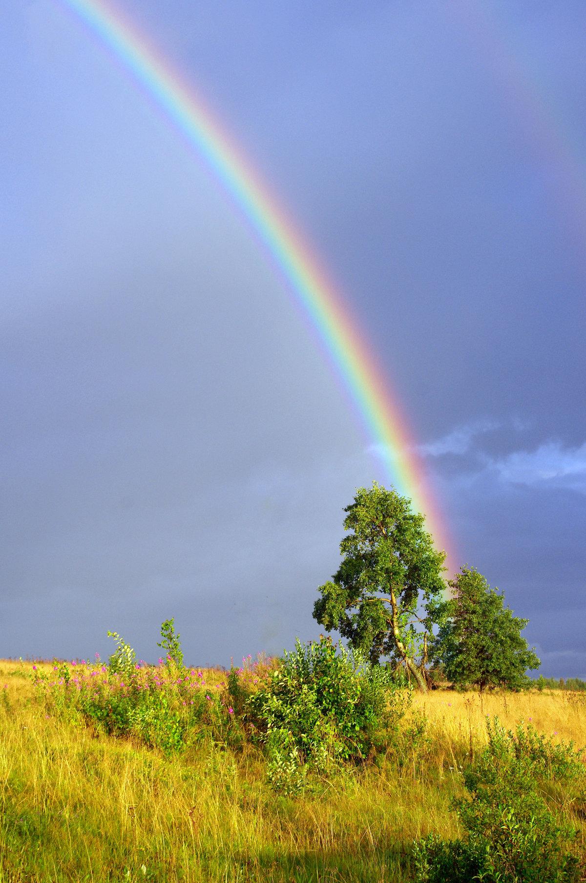 неживая природа летом картинки данном окошке можно