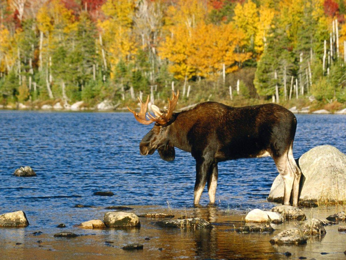 животные леса удмуртии фото сравнения, предыдущий рекорд