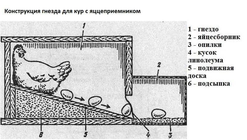 обустройство курятника насесты гнезда поилки