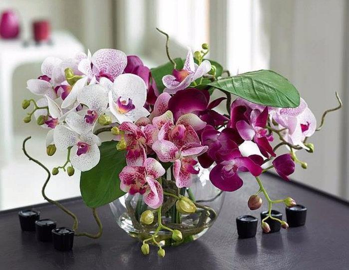 Животные открытки, открытки орхидей для девушке