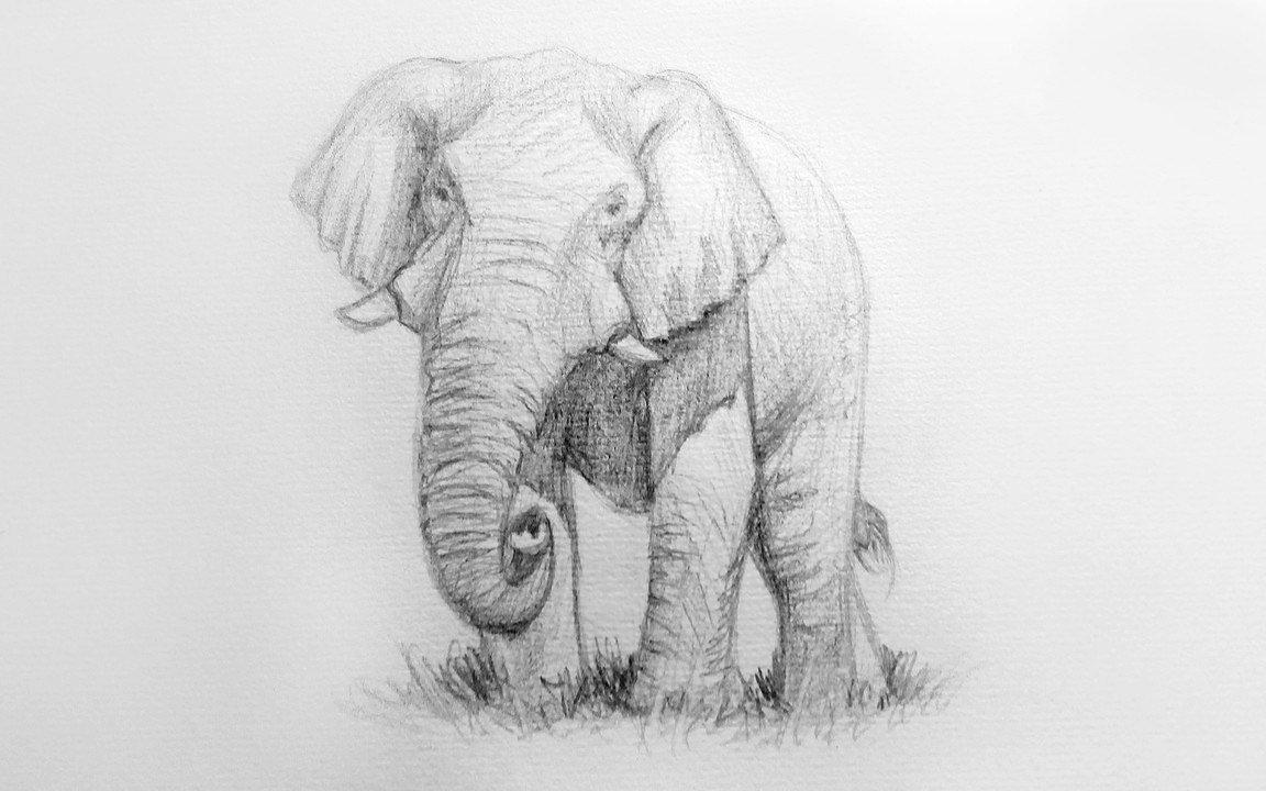 комплекте слоники рисунок карандашом объяснили