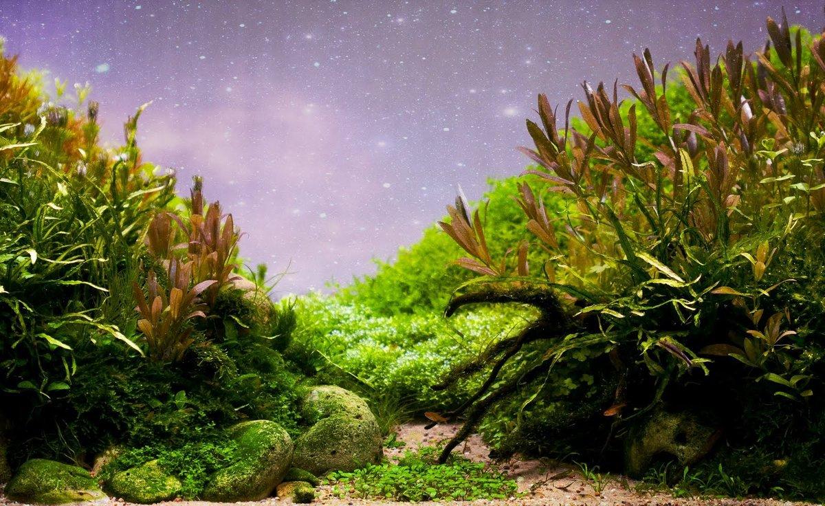 Картинки водоросли для аквариума