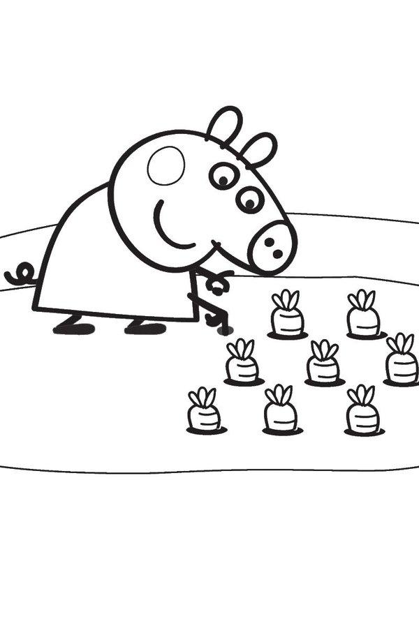 20 карточек в коллекции раскраска свинка пеппа