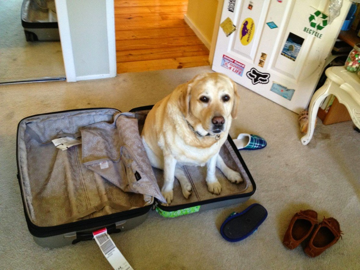 Смешные картинки с чемоданом и животными, днем рождения