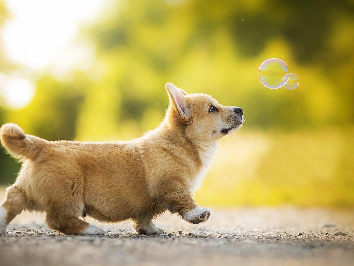 Щенок и мыльный пузырь.