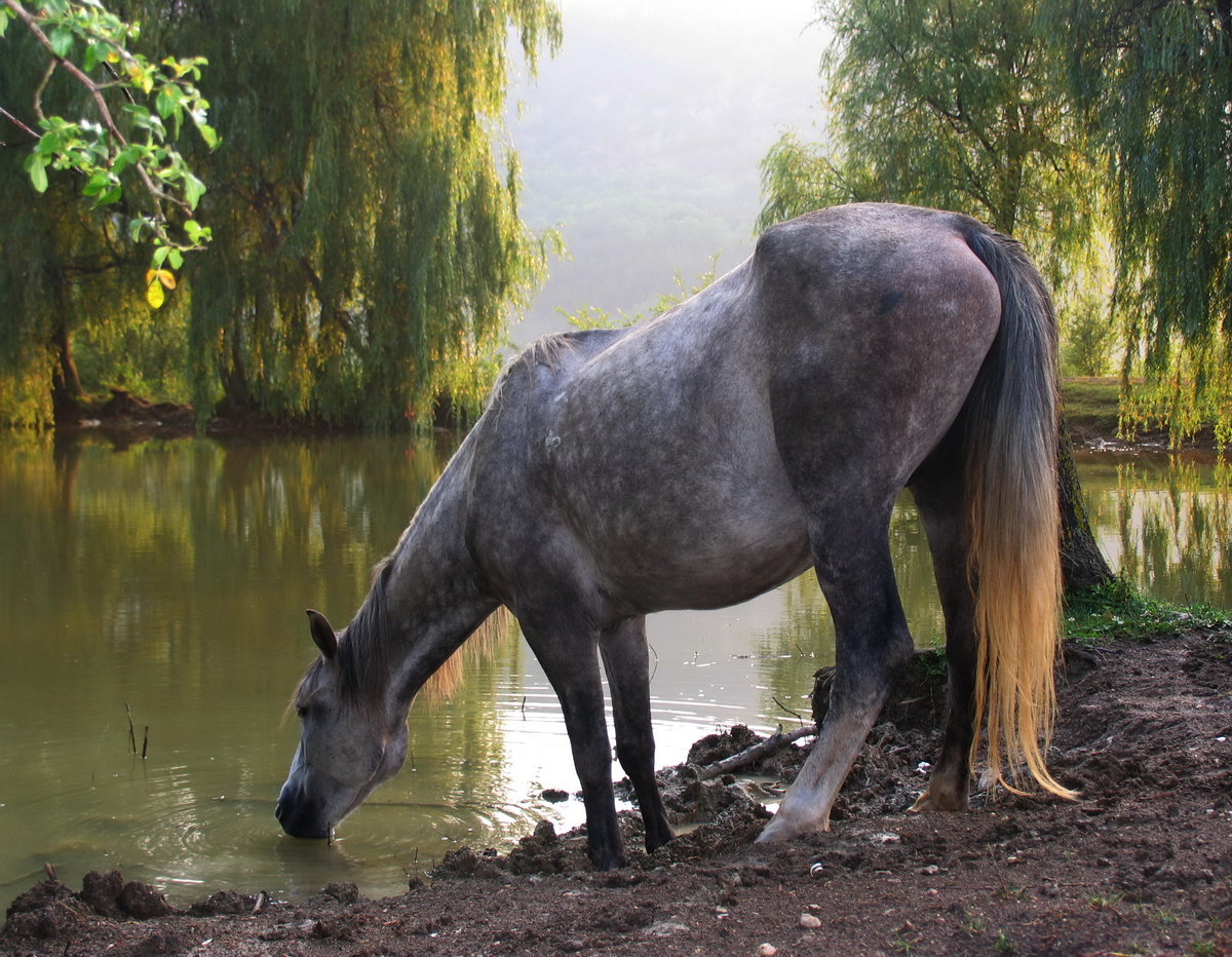 озеро конь в картинках творчество вроде