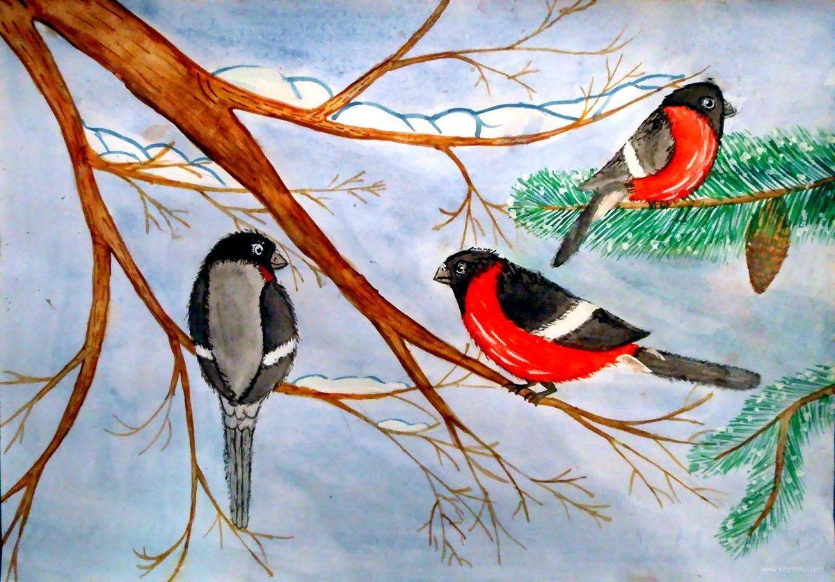 Снегирь картинки для детей нарисованные, знаний картинки учителю