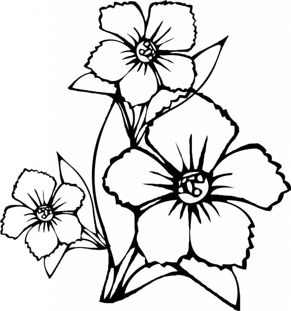 Цифр, раскраски с цветами красивые