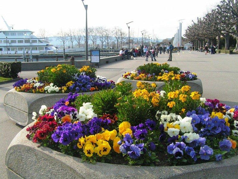 Доставка цветов по городу мариуполь клумба