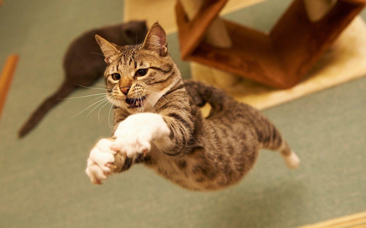 Котик прикольный картинки