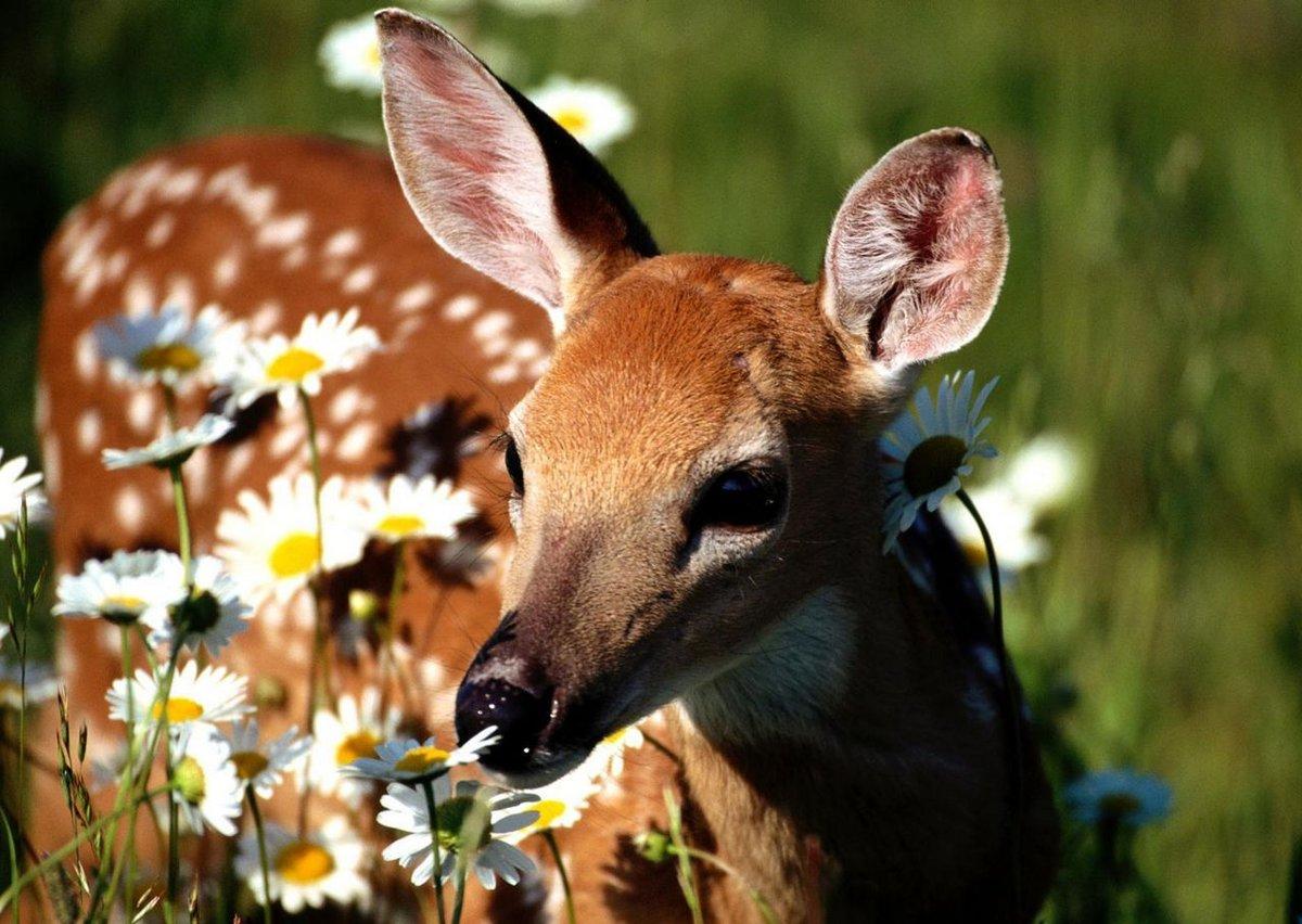 Открытки животных и природа, открытка видео фотомонтаж