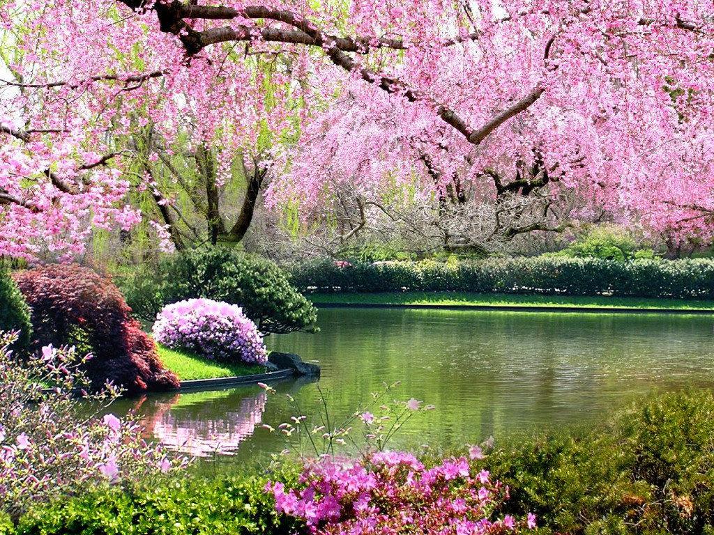 Найти живые картинки весну и лето для стола