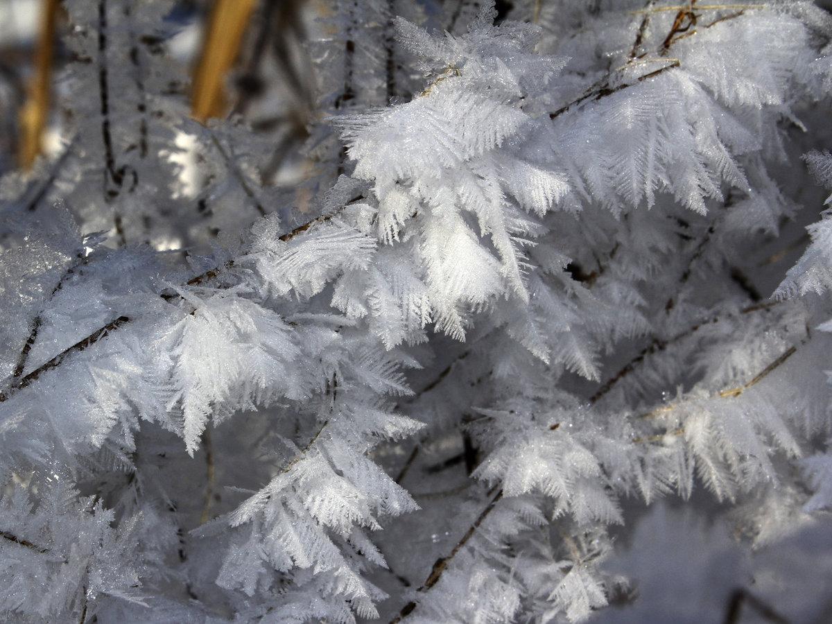 самое красивое фото зимней изморози инея города-рынка долгое