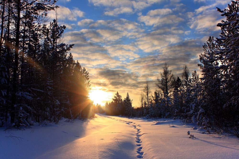 Картинки раннего утра зимой, винни