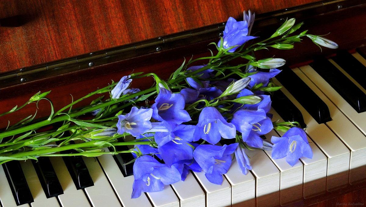 Музыка в картинках с цветами, картинки