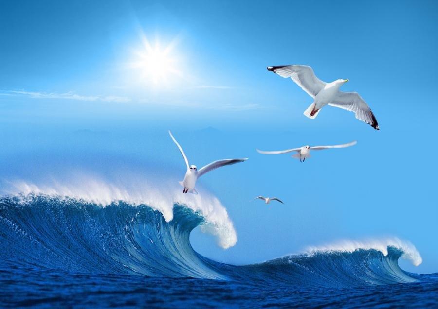 Садоводу, картинки анимации чайки и море