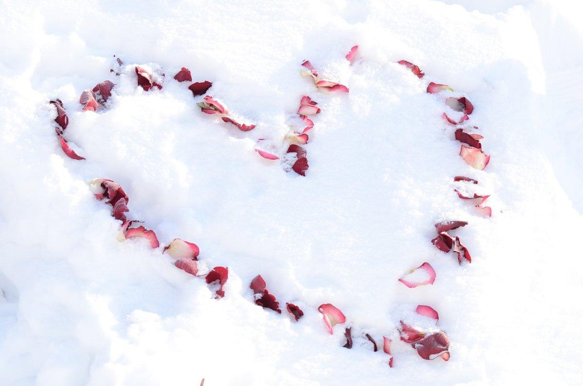 фото розы на снегу и след человека этот