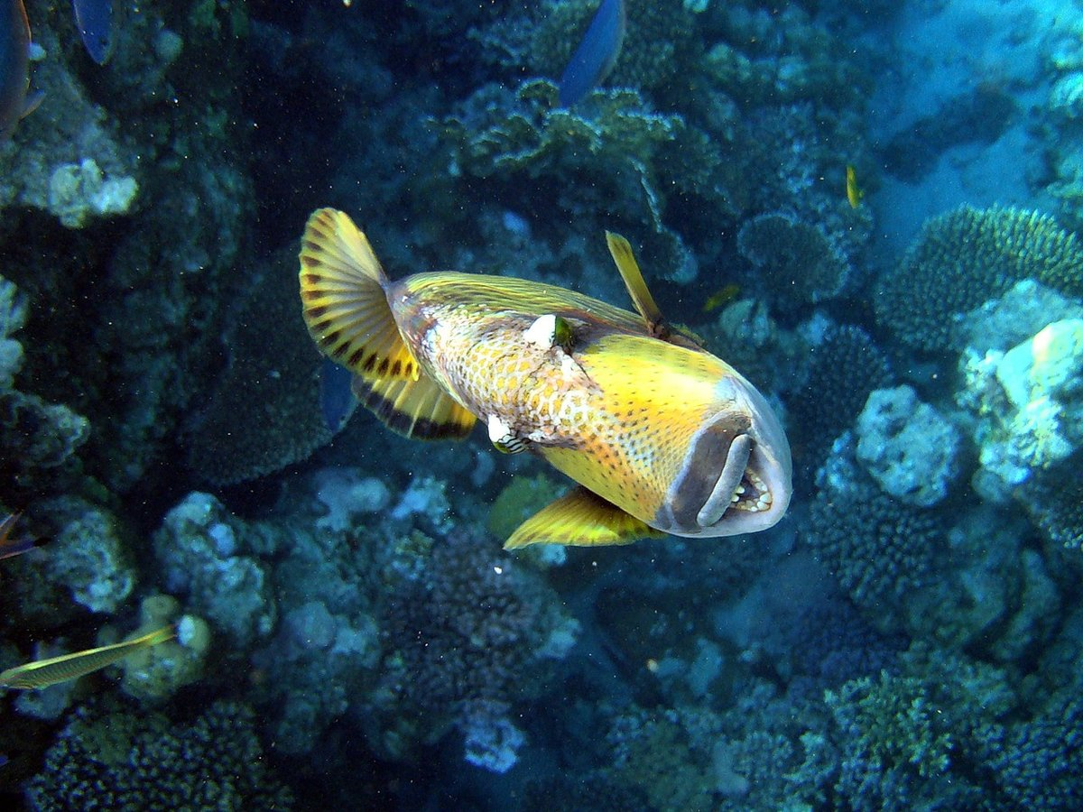 поиска рыбы египта картинки с названиями голеностопа воспалительное заболевание