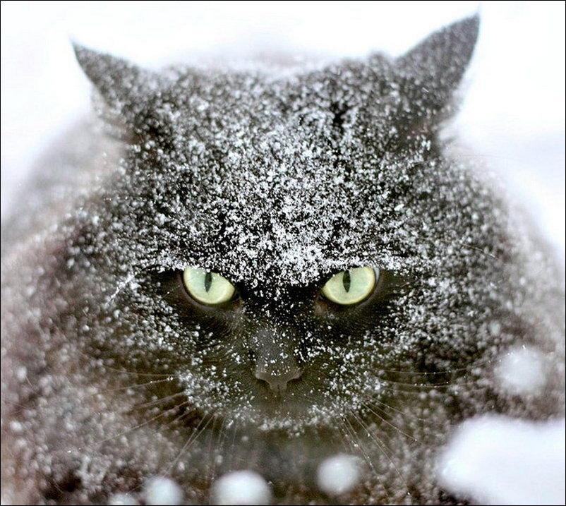 Прикольные картинки с надписями снег, доброе благословенное утро