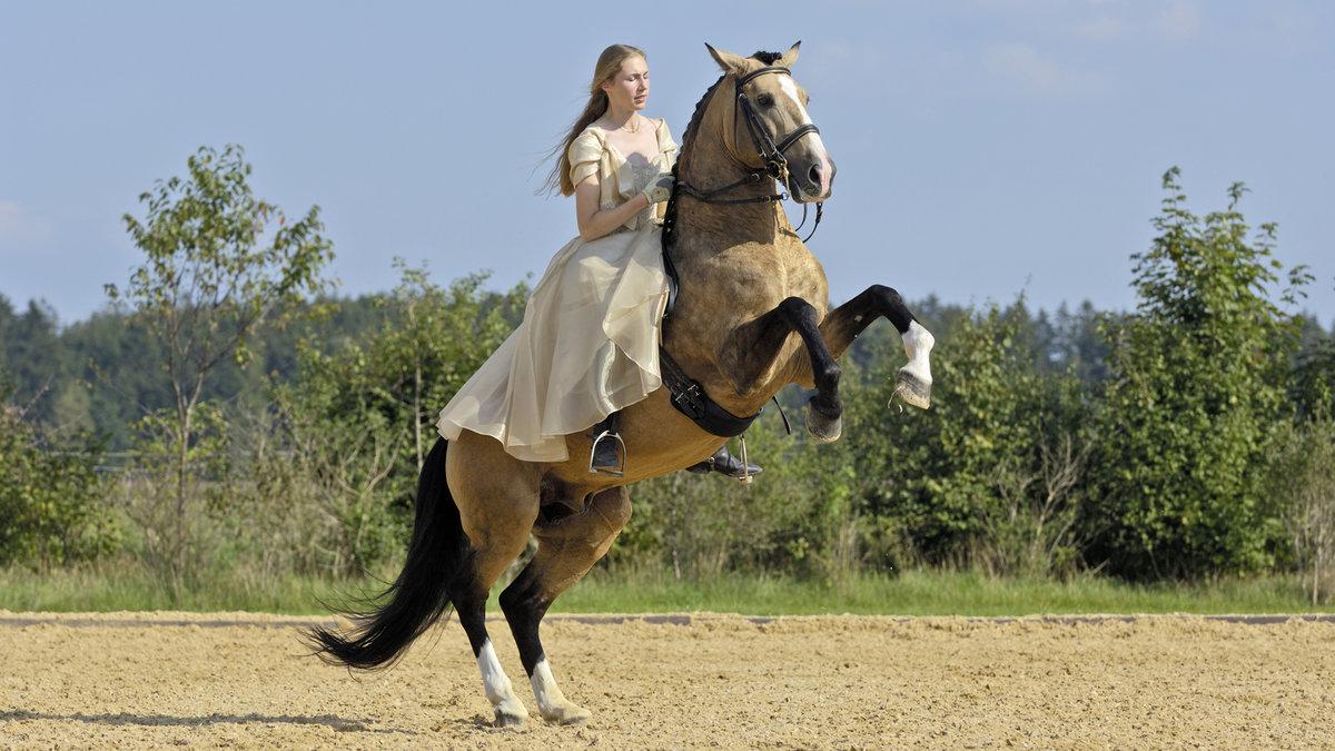 прогрессирующим а кони все бегут картинки большим удовольствием ребята