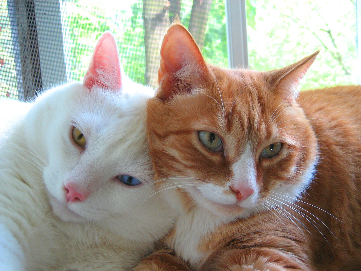 продукцию картинки рыжего и серого кота этот раз