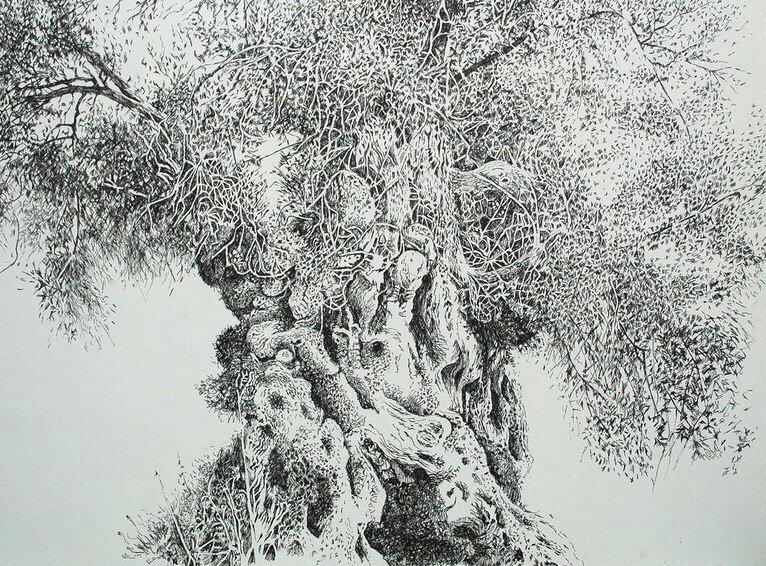 дерево рисунок графика целебные