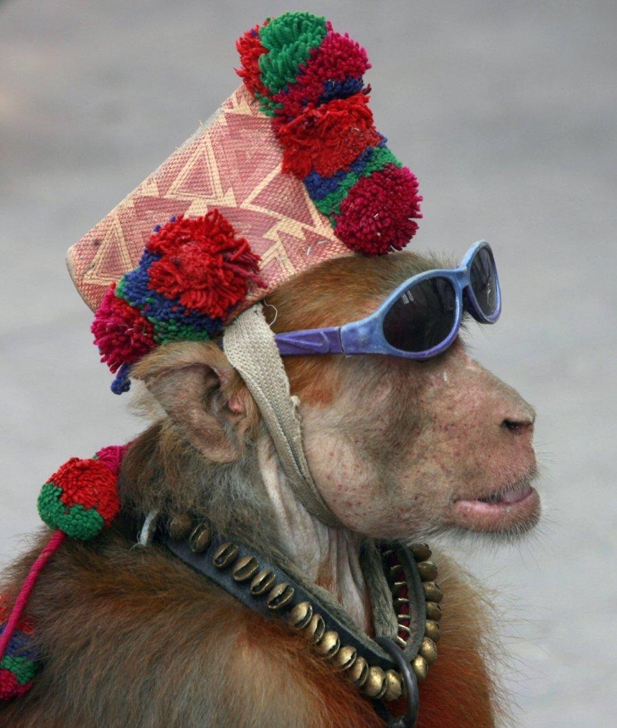 Картинки прикольных обезьянок, днем рождения