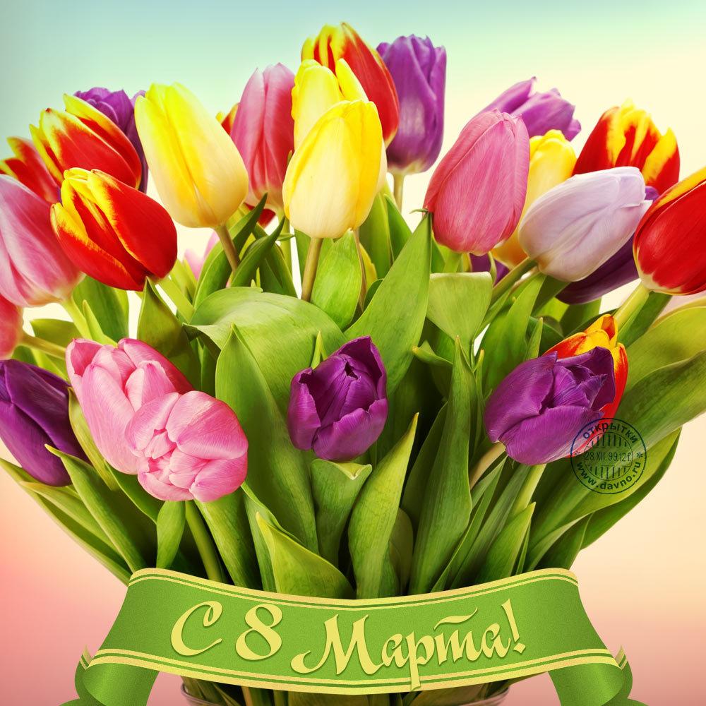 Тюльпаны 8 марта открытка, лет свадьбы родителям