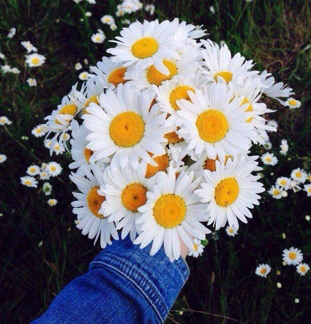 Цветок, ромашки букет в руках